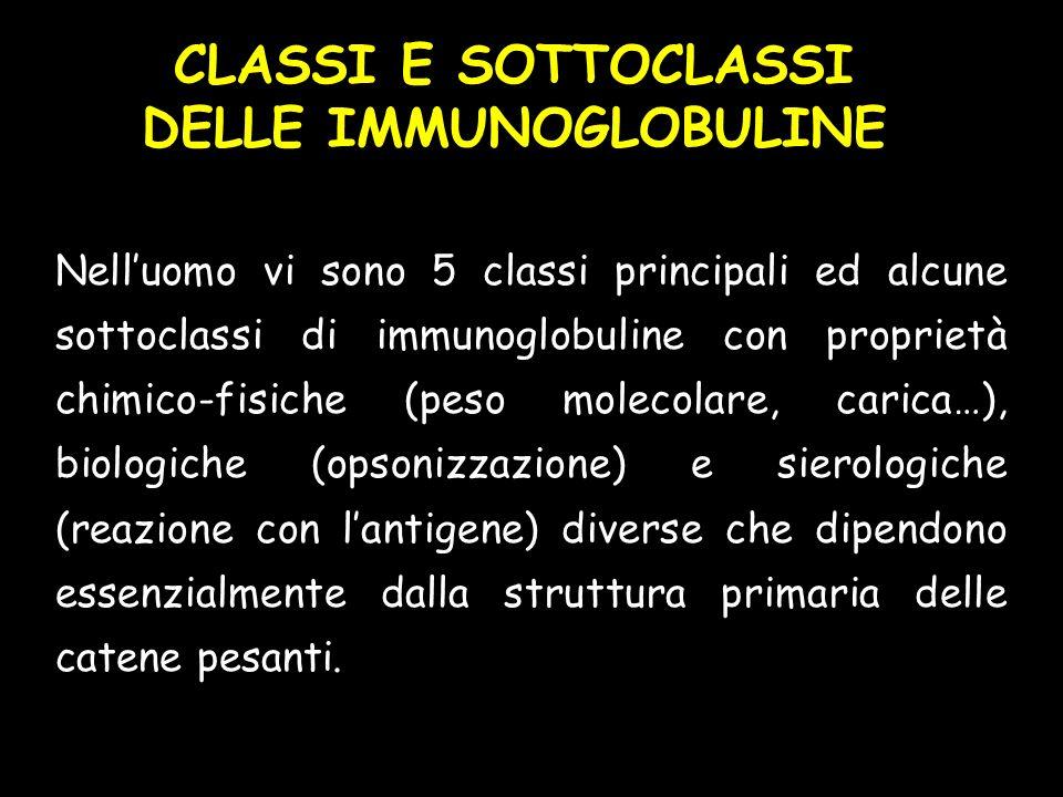 CLASSI E SOTTOCLASSI DELLE IMMUNOGLOBULINE