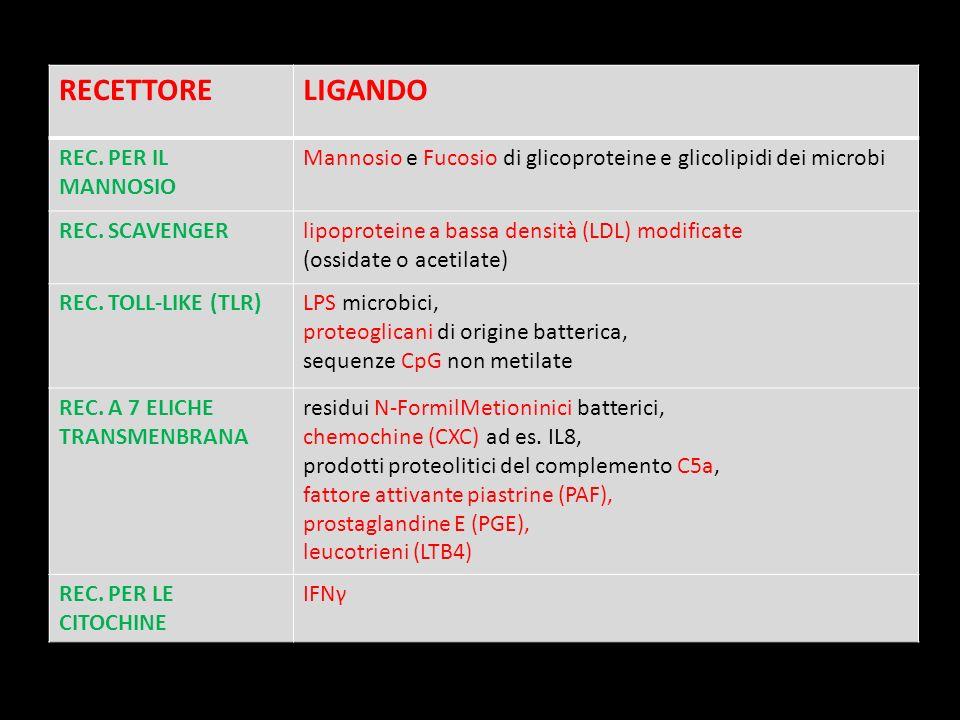 RECETTORE LIGANDO REC. PER IL MANNOSIO