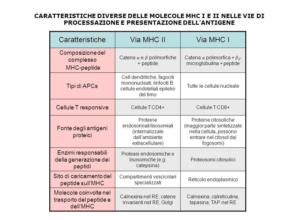 Caratteristiche Via MHC II Via MHC I