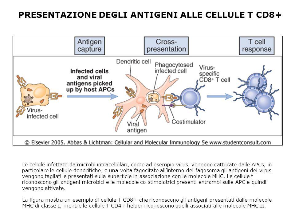 PRESENTAZIONE DEGLI ANTIGENI ALLE CELLULE T CD8+