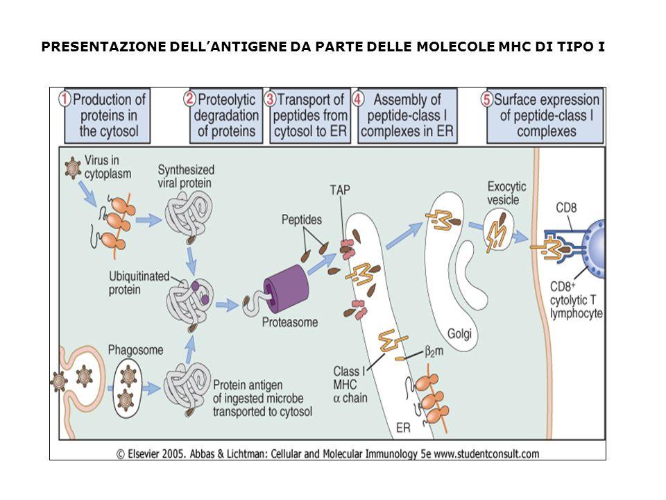 PRESENTAZIONE DELL'ANTIGENE DA PARTE DELLE MOLECOLE MHC DI TIPO I
