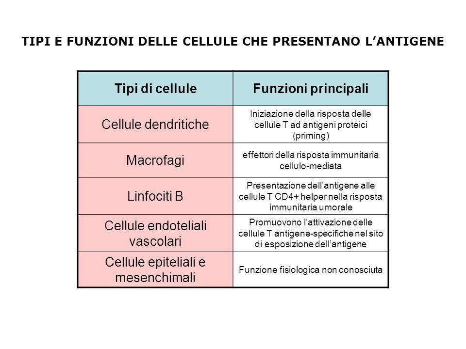 Tipi di cellule Funzioni principali