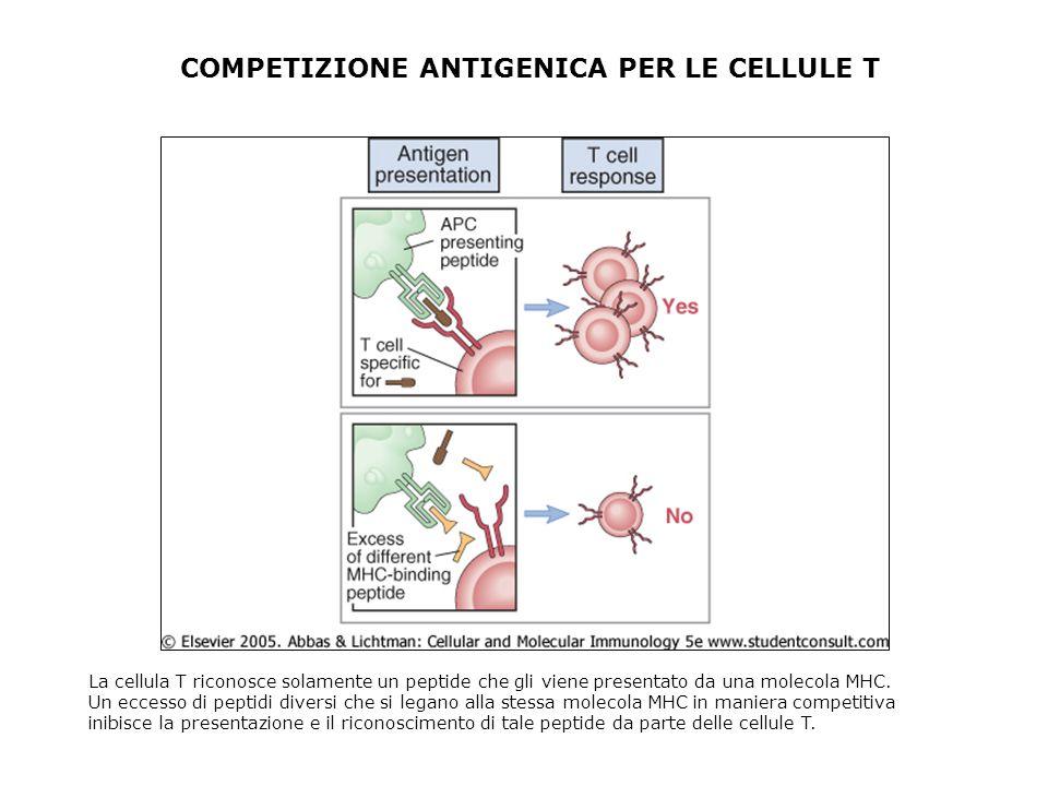COMPETIZIONE ANTIGENICA PER LE CELLULE T