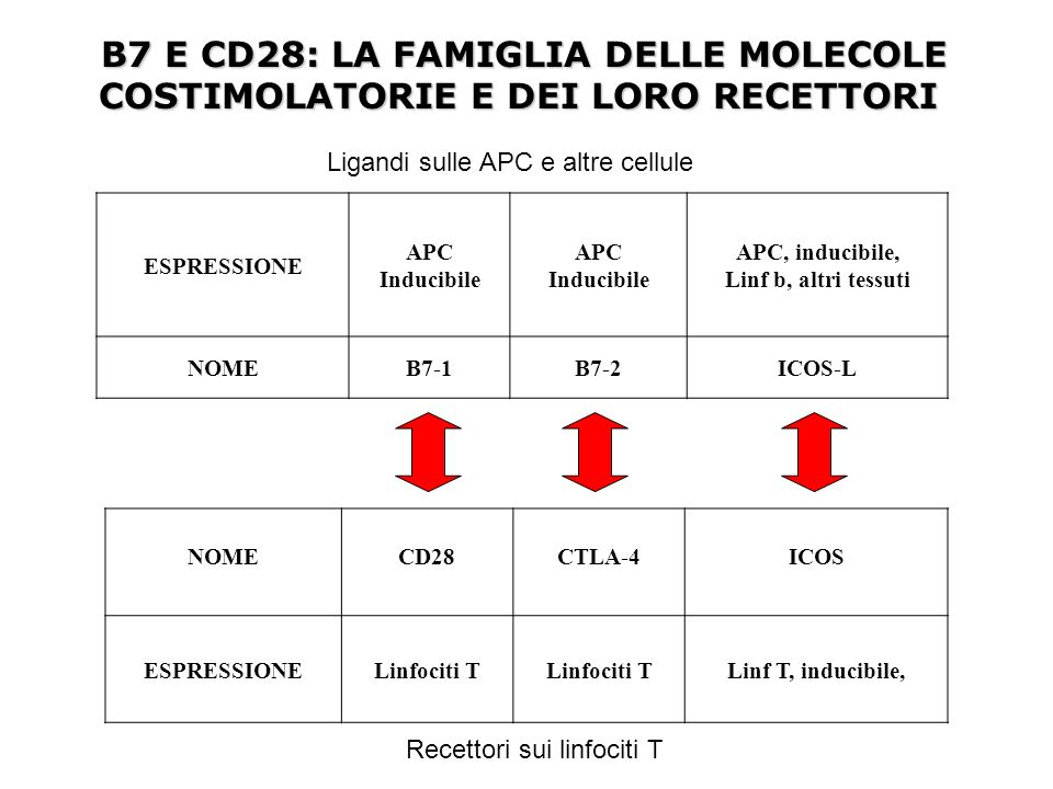 B7 E CD28: LA FAMIGLIA DELLE MOLECOLE COSTIMOLATORIE E DEI LORO RECETTORI
