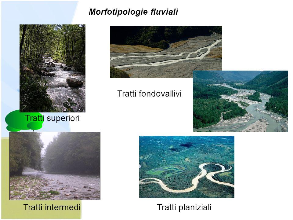 Morfotipologie fluviali
