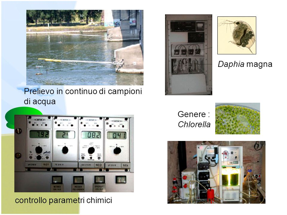 Daphia magna Prelievo in continuo di campioni. di acqua.