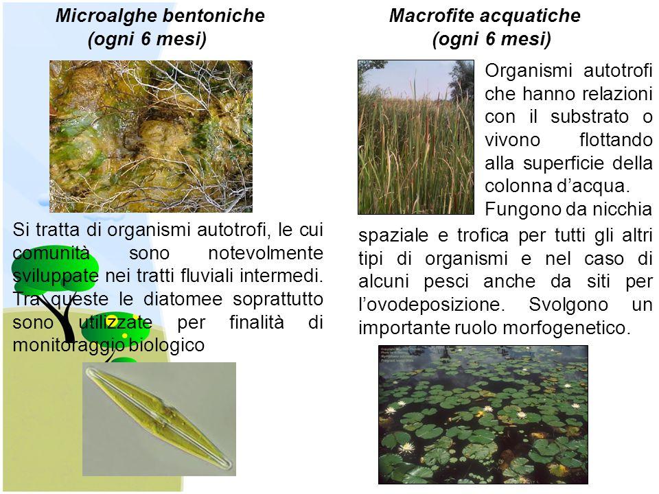 Microalghe bentoniche Macrofite acquatiche