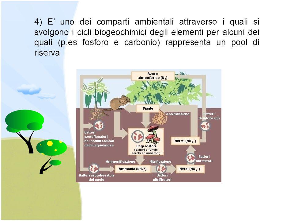 4) E' uno dei comparti ambientali attraverso i quali si svolgono i cicli biogeochimici degli elementi per alcuni dei quali (p.es fosforo e carbonio) rappresenta un pool di riserva