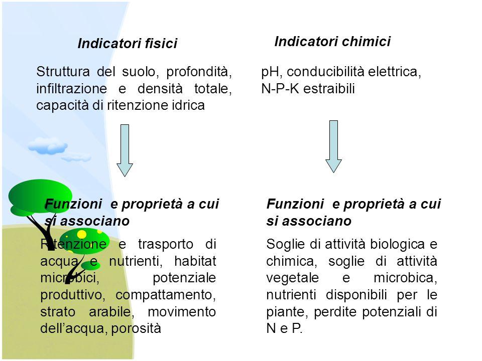 Indicatori fisici Indicatori chimici. Struttura del suolo, profondità, infiltrazione e densità totale, capacità di ritenzione idrica.