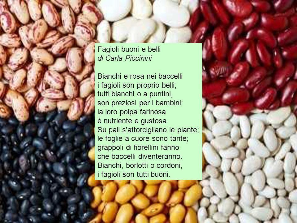 Fagioli buoni e belli di Carla Piccinini