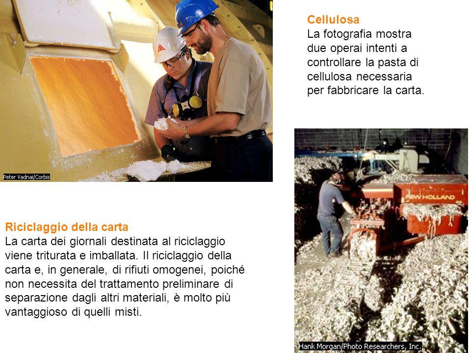 Cellulosa La fotografia mostra due operai intenti a controllare la pasta di cellulosa necessaria per fabbricare la carta.