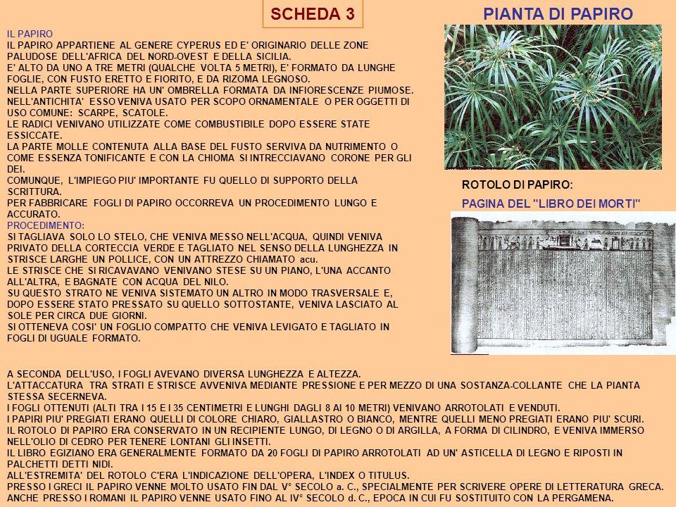 SCHEDA 3 PIANTA DI PAPIRO ROTOLO DI PAPIRO: