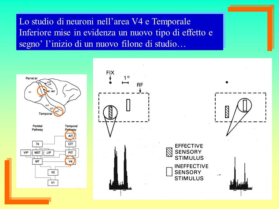 Lo studio di neuroni nell'area V4 e Temporale Inferiore mise in evidenza un nuovo tipo di effetto e segno' l'inizio di un nuovo filone di studio…