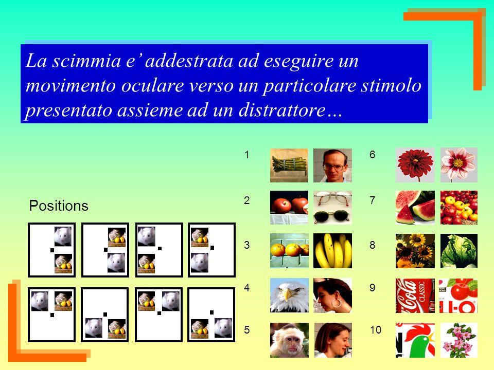 La scimmia e' addestrata ad eseguire un movimento oculare verso un particolare stimolo presentato assieme ad un distrattore…