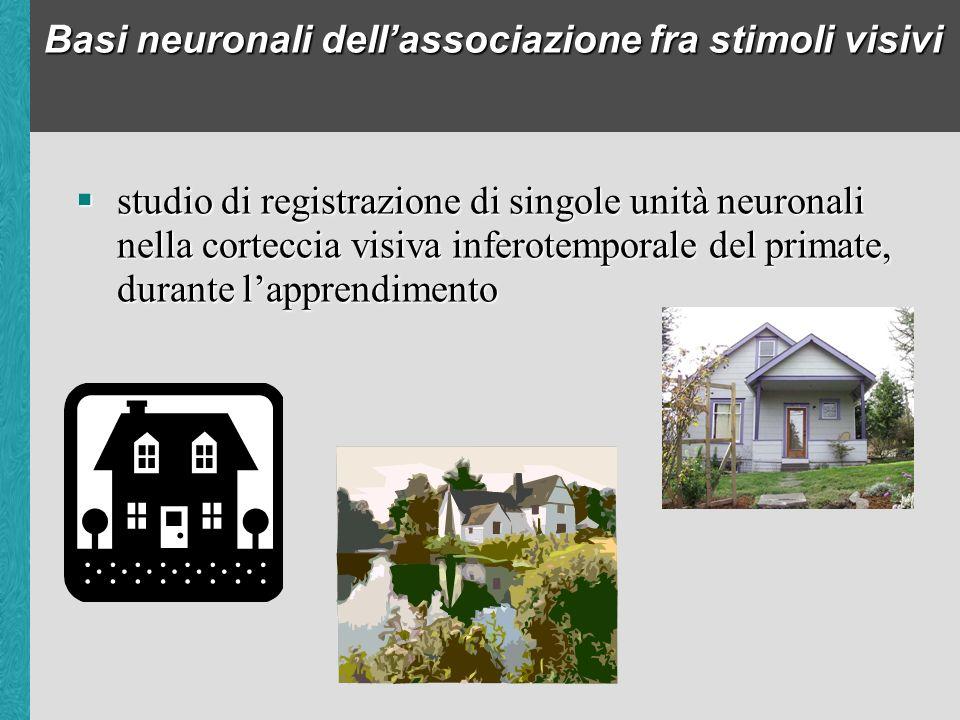 Basi neuronali dell'associazione fra stimoli visivi