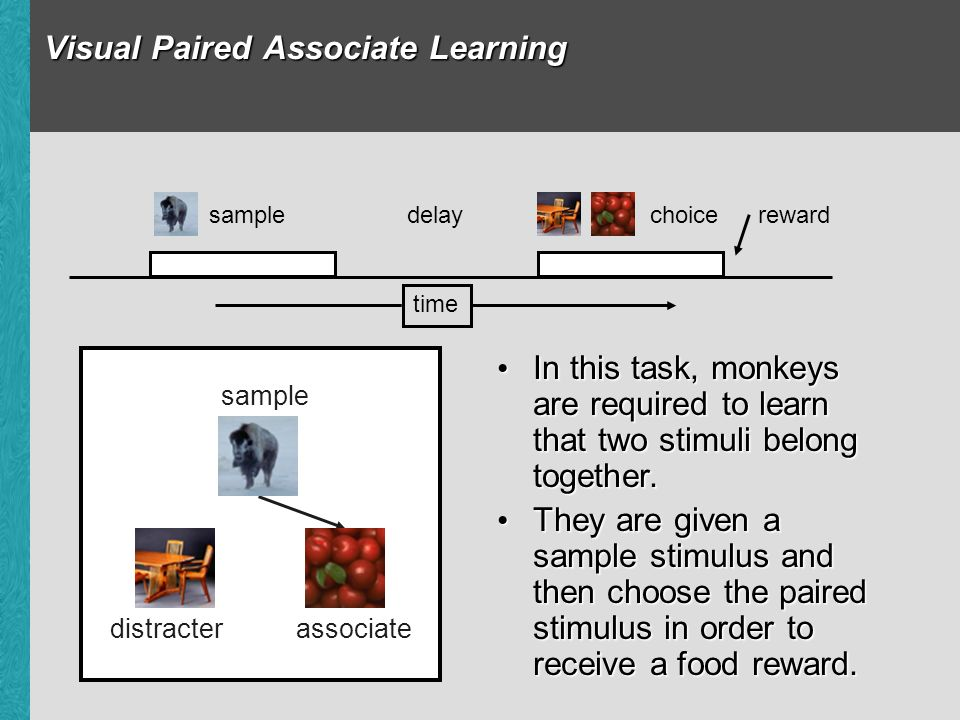 Visual Paired Associate Learning