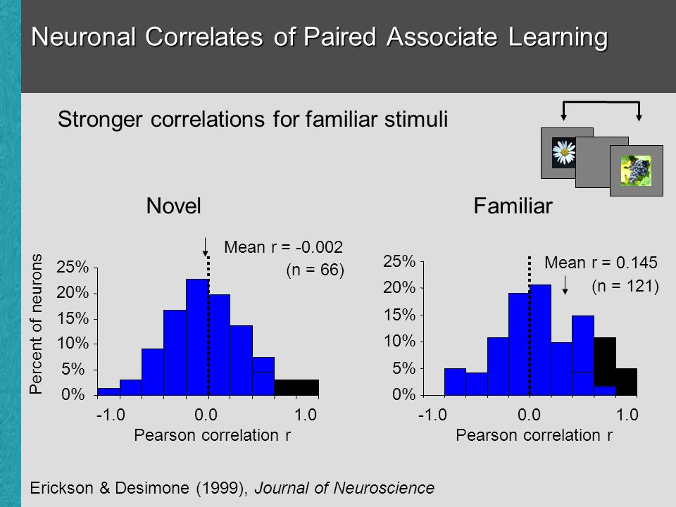 Neuronal Correlates of Paired Associate Learning