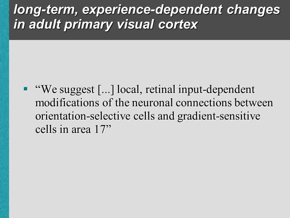 long-term, experience-dependent changes in adult primary visual cortex