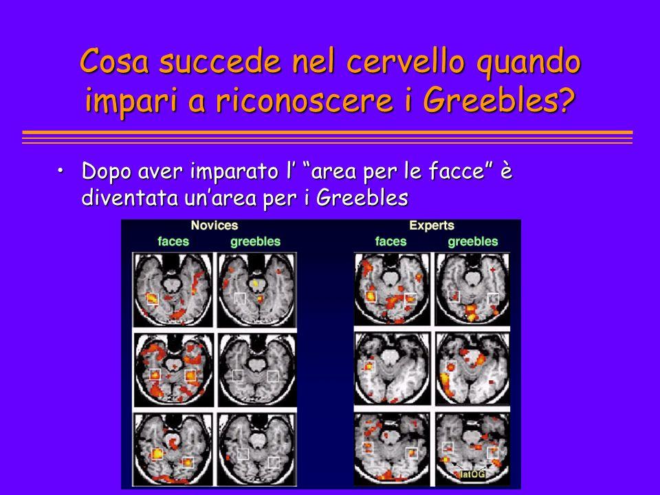 Cosa succede nel cervello quando impari a riconoscere i Greebles
