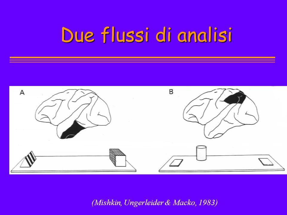 Due flussi di analisi (Mishkin, Ungerleider & Macko, 1983)