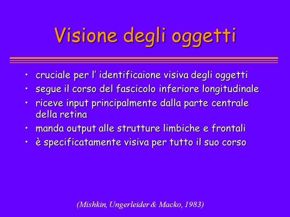 Visione degli oggetti cruciale per l' identificaione visiva degli oggetti. segue il corso del fascicolo inferiore longitudinale.