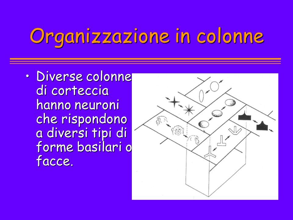 Organizzazione in colonne