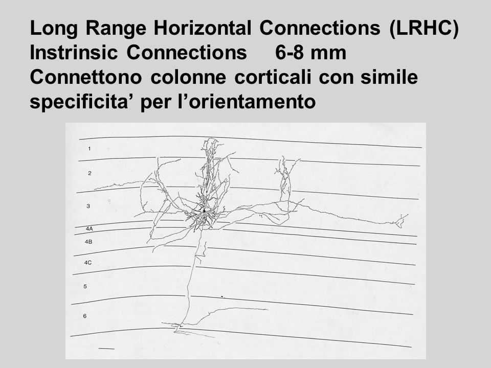 Long Range Horizontal Connections (LRHC)