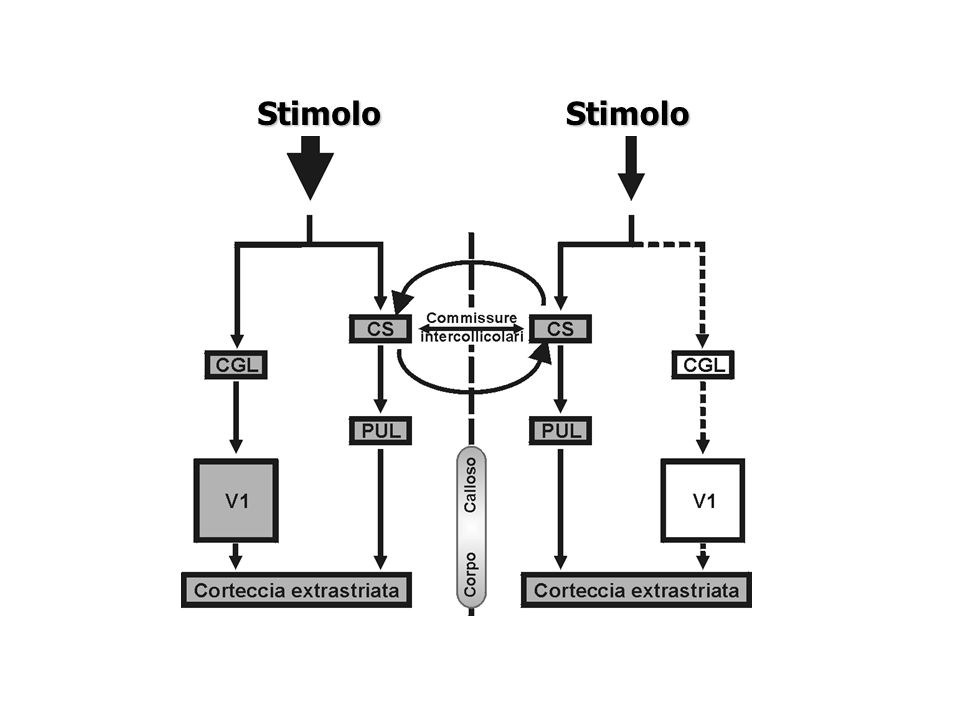 Stimolo Stimolo