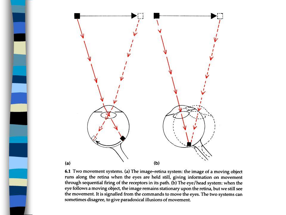 In questa figura sono illustrati i due processi