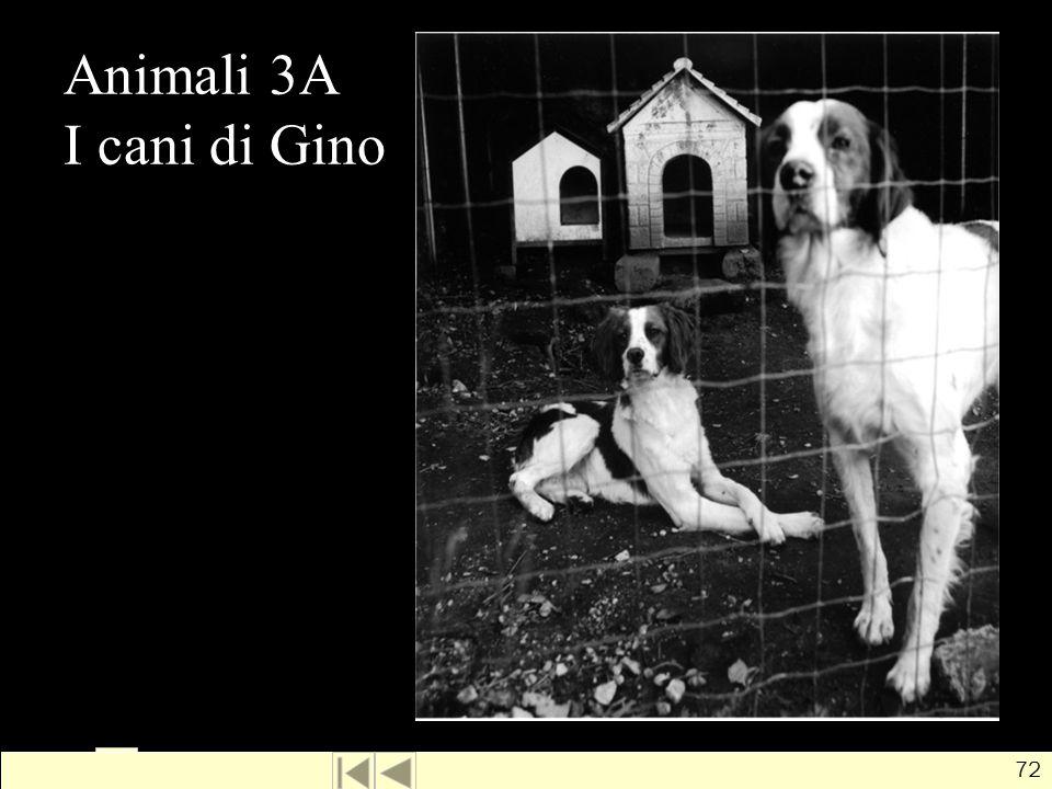 Animali 3A I cani di Gino