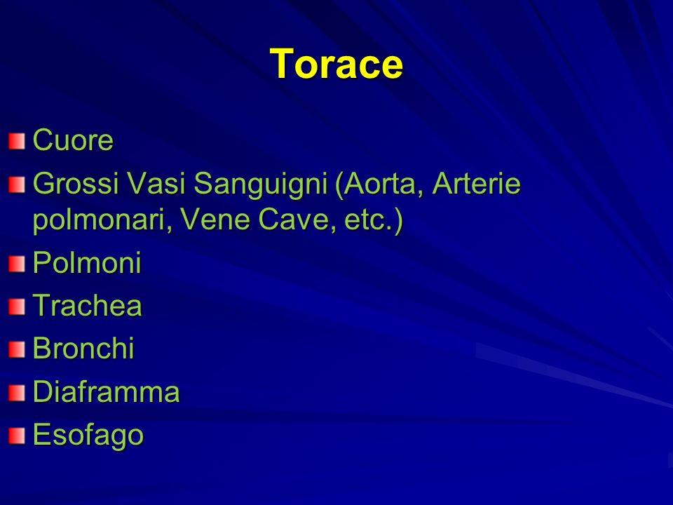Torace Cuore. Grossi Vasi Sanguigni (Aorta, Arterie polmonari, Vene Cave, etc.) Polmoni. Trachea.