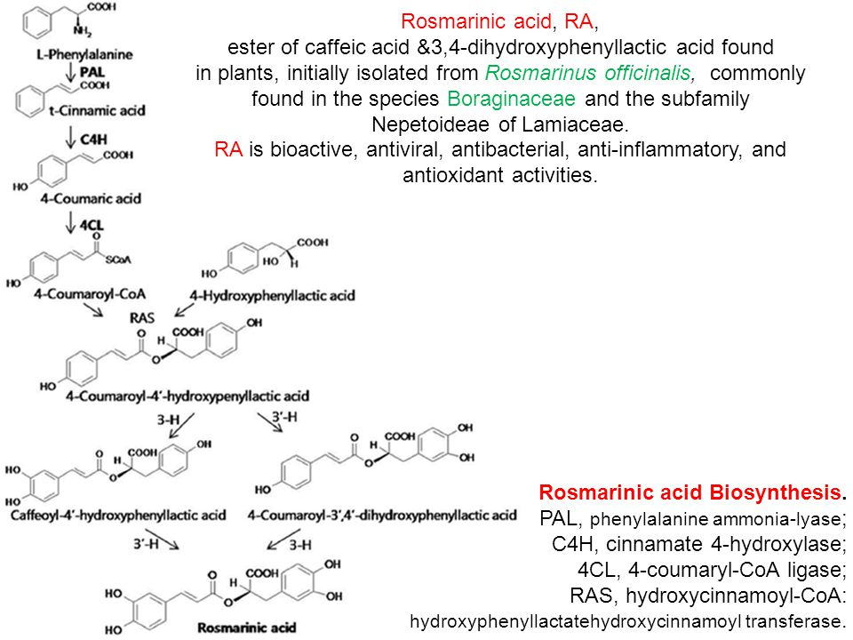 ester of caffeic acid &3,4-dihydroxyphenyllactic acid found