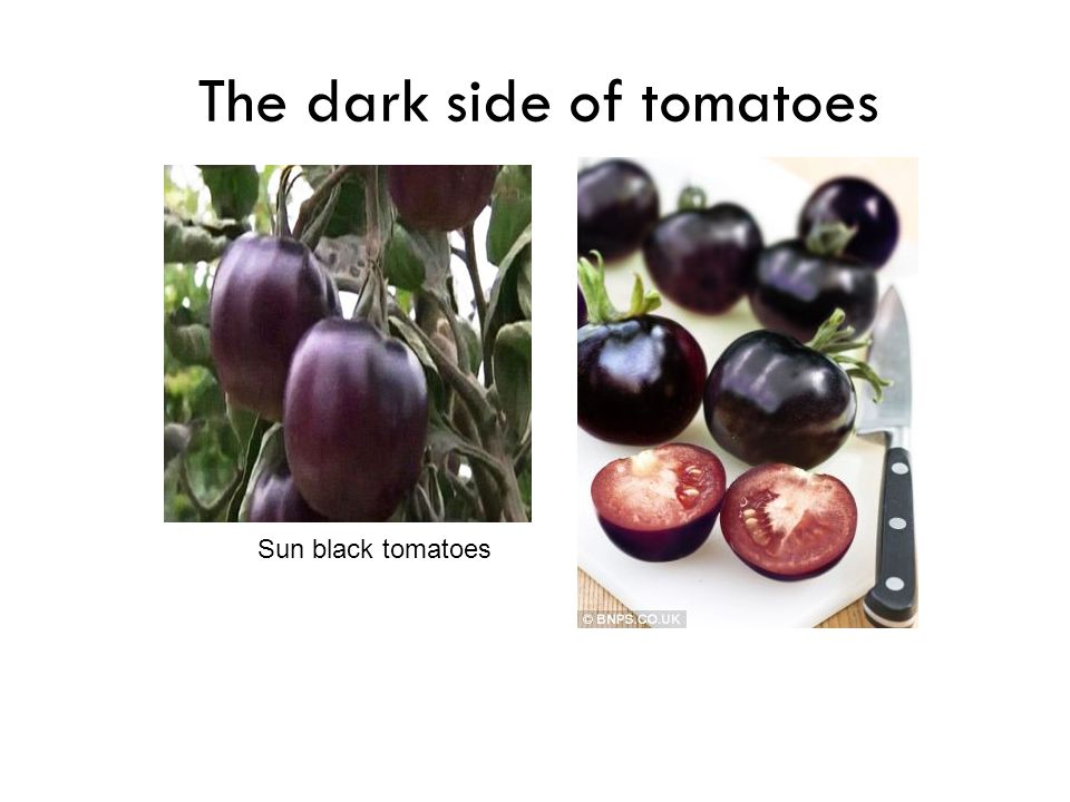 The dark side of tomatoes
