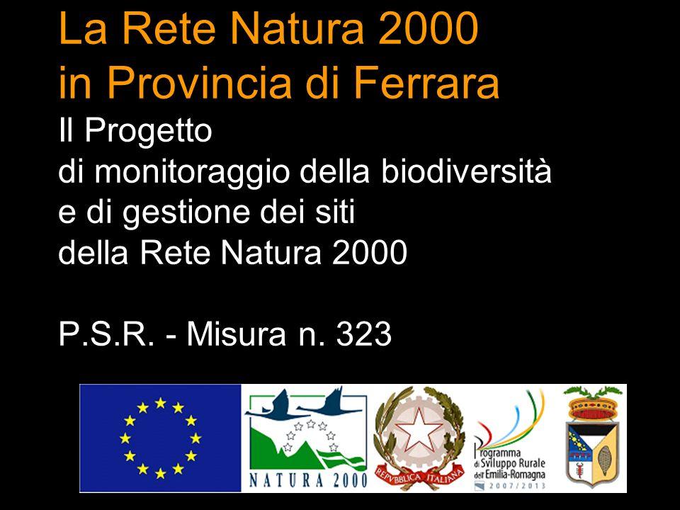 La Rete Natura 2000 in Provincia di Ferrara Il Progetto di monitoraggio della biodiversità e di gestione dei siti della Rete Natura 2000 P.S.R.