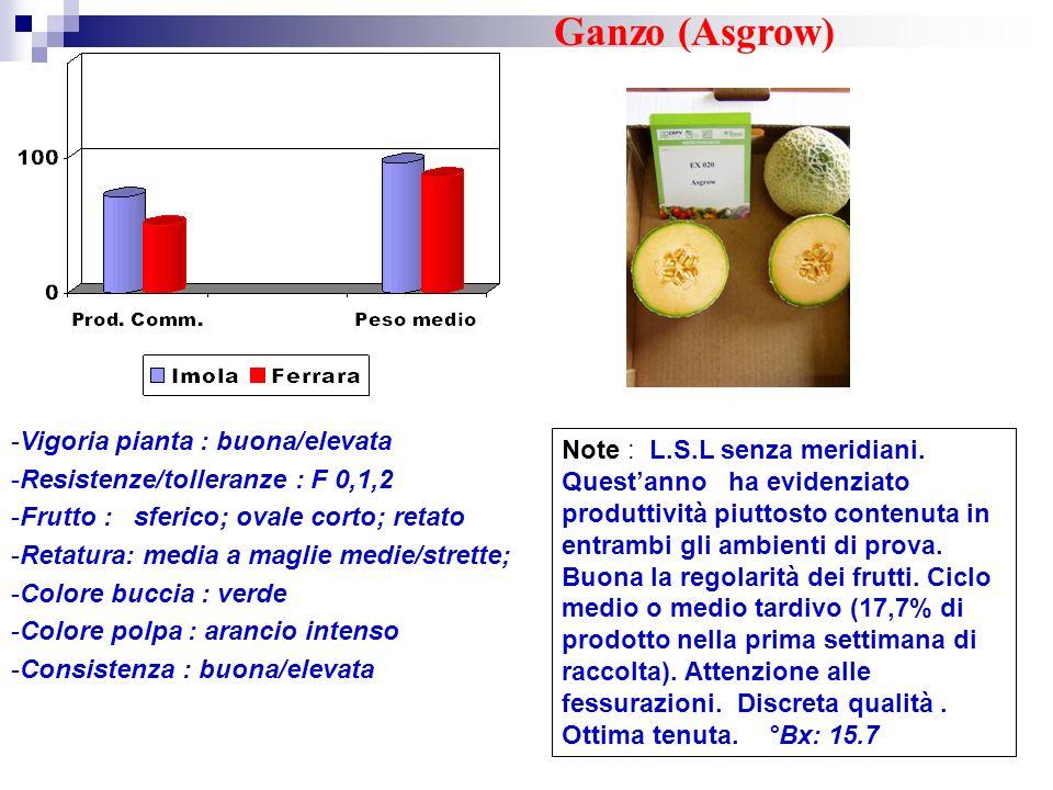 Ganzo (Asgrow) Vigoria pianta : buona/elevata
