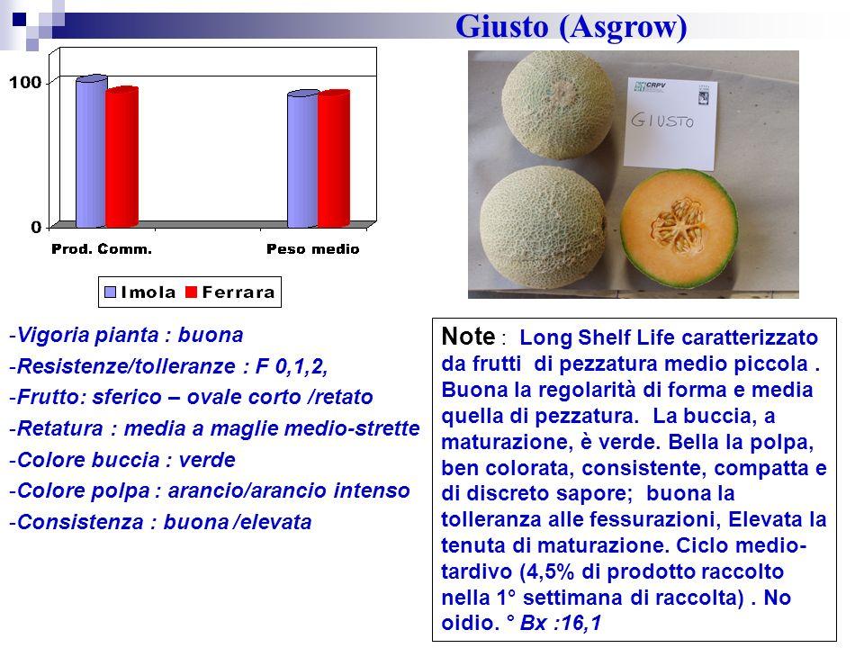 Giusto (Asgrow) Vigoria pianta : buona. Resistenze/tolleranze : F 0,1,2, Frutto: sferico – ovale corto /retato.