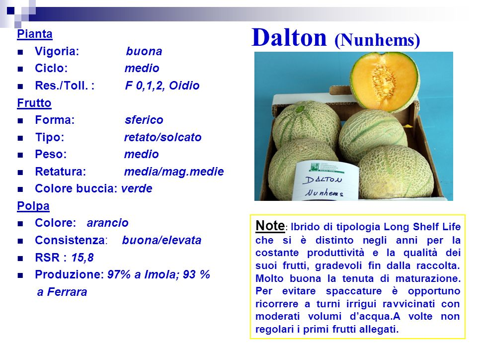Dalton (Nunhems) Pianta. Vigoria: buona. Ciclo: medio. Res./Toll. : F 0,1,2, Oidio.