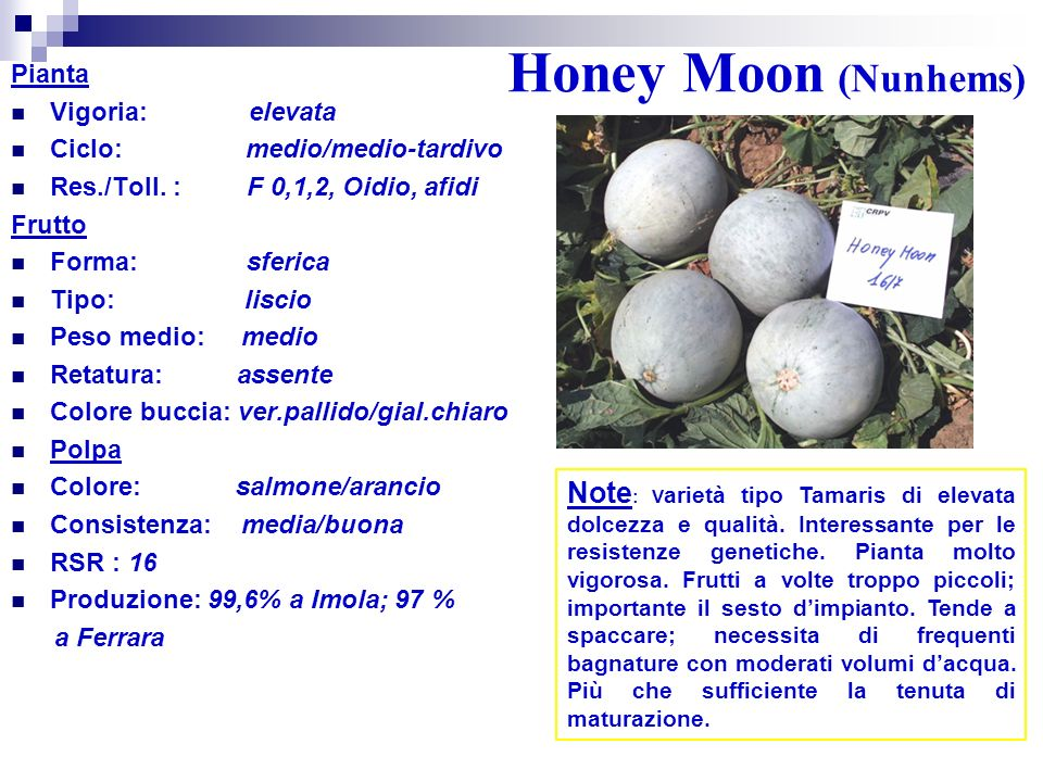 Honey Moon (Nunhems) Pianta. Vigoria: elevata. Ciclo: medio/medio-tardivo.