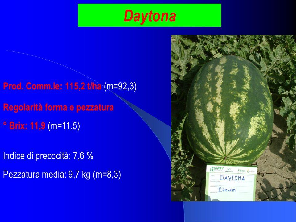 Daytona Prod. Comm.le: 115,2 t/ha (m=92,3)