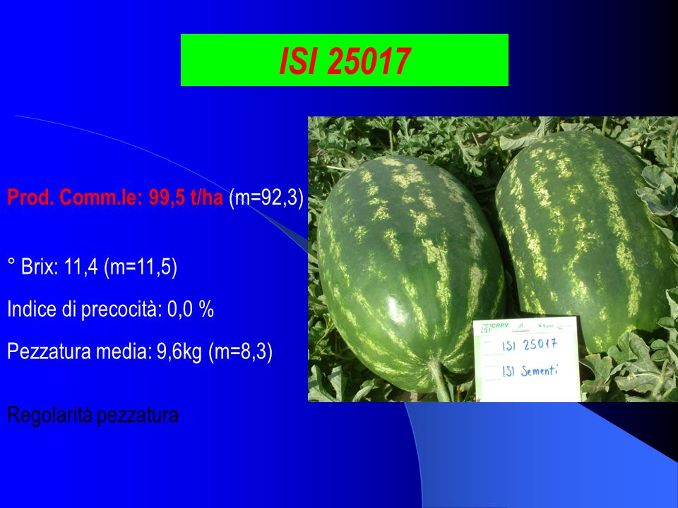ISI 25017 Prod. Comm.le: 99,5 t/ha (m=92,3) ° Brix: 11,4 (m=11,5)