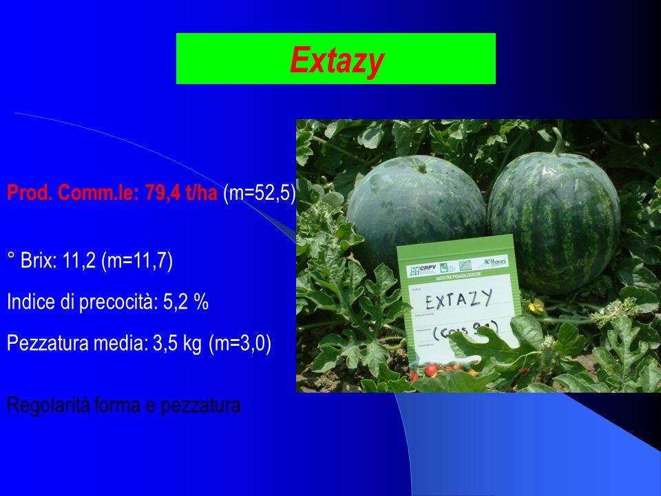 Extazy Prod. Comm.le: 79,4 t/ha (m=52,5) ° Brix: 11,2 (m=11,7)
