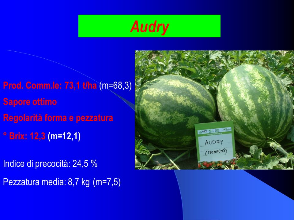 Audry Prod. Comm.le: 73,1 t/ha (m=68,3) Sapore ottimo