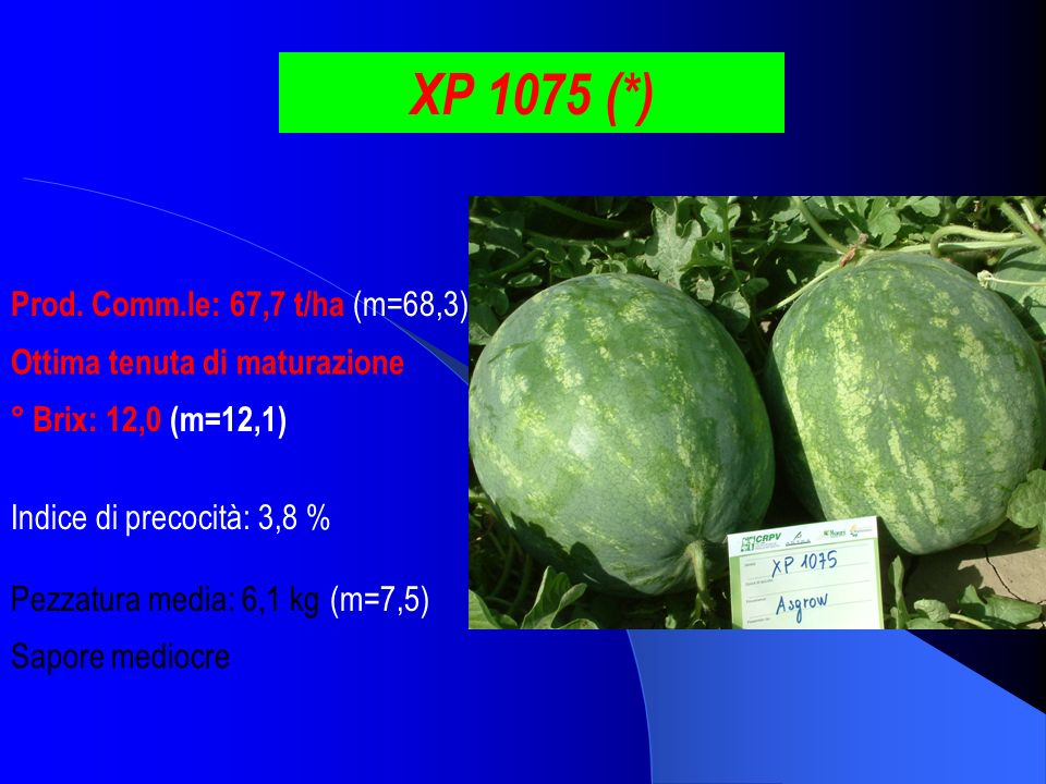 XP 1075 (*) Prod. Comm.le: 67,7 t/ha (m=68,3)