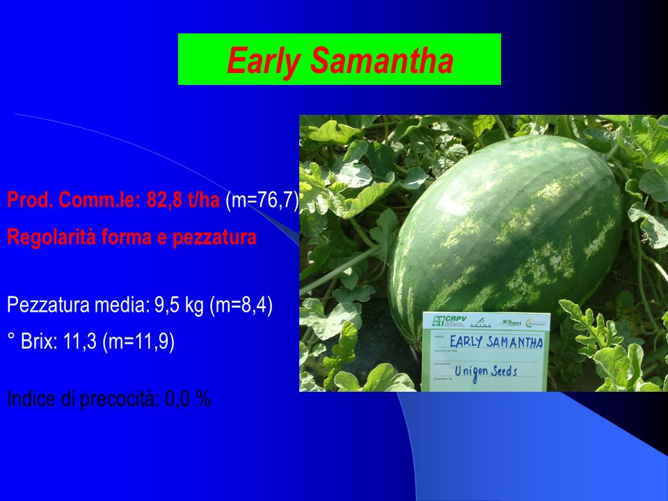Early Samantha Prod. Comm.le: 82,8 t/ha (m=76,7)