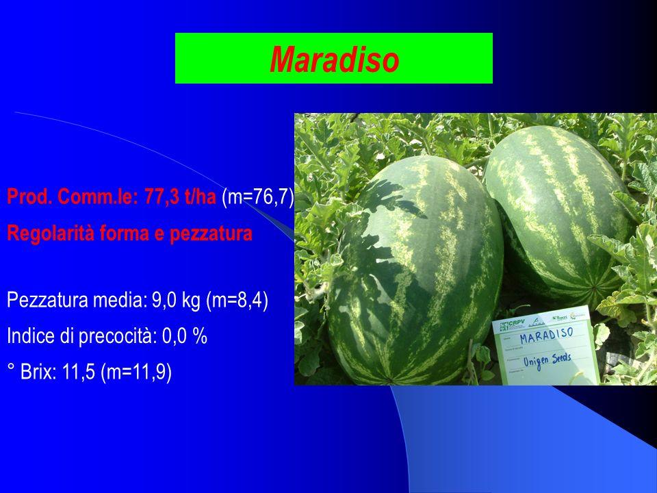 Maradiso Prod. Comm.le: 77,3 t/ha (m=76,7)