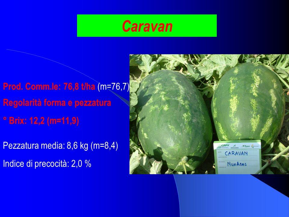 Caravan Prod. Comm.le: 76,8 t/ha (m=76,7) Regolarità forma e pezzatura