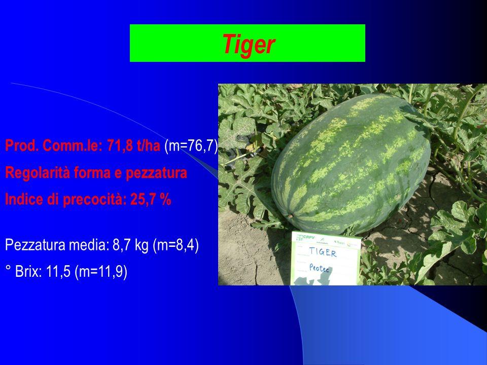 Tiger Prod. Comm.le: 71,8 t/ha (m=76,7) Regolarità forma e pezzatura