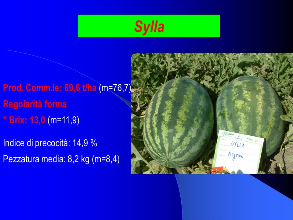 Sylla Prod. Comm.le: 69,6 t/ha (m=76,7) Regolarità forma