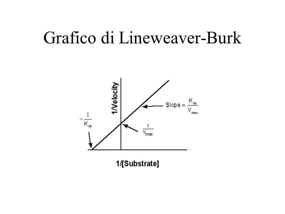 Grafico di Lineweaver-Burk