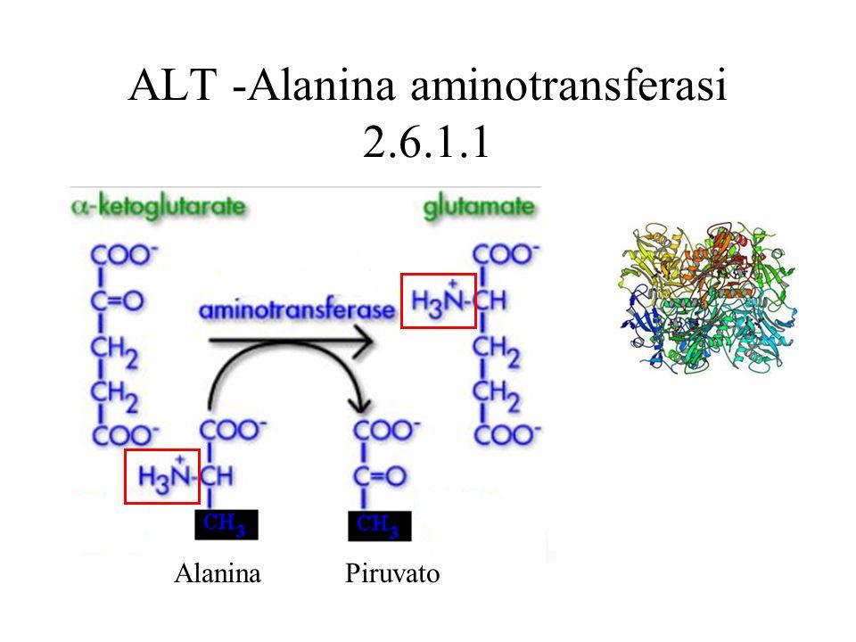 ALT -Alanina aminotransferasi 2.6.1.1